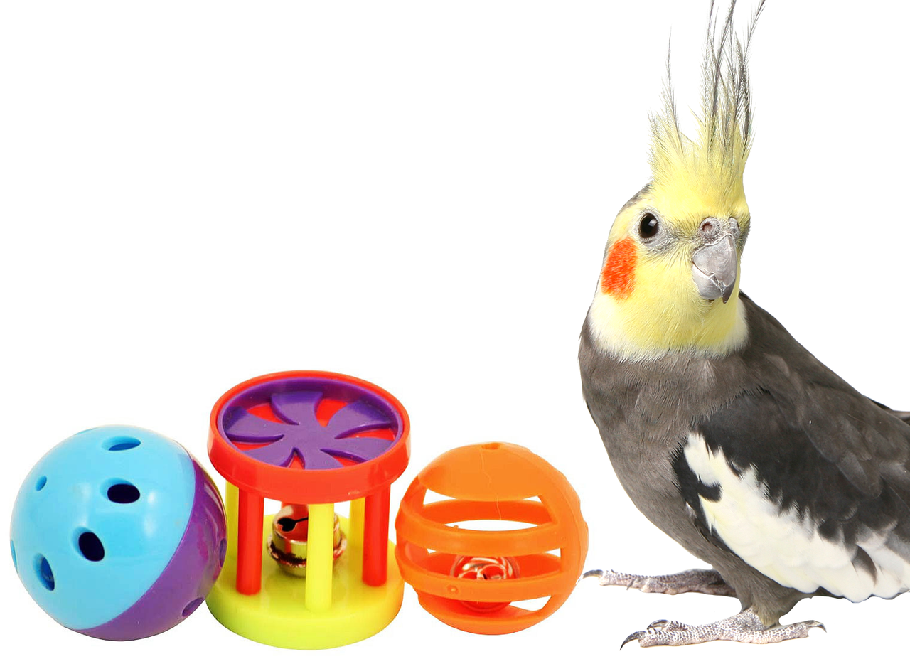 Discount Bird Toys : What are the best selling bird foot toys? bonka bird toys